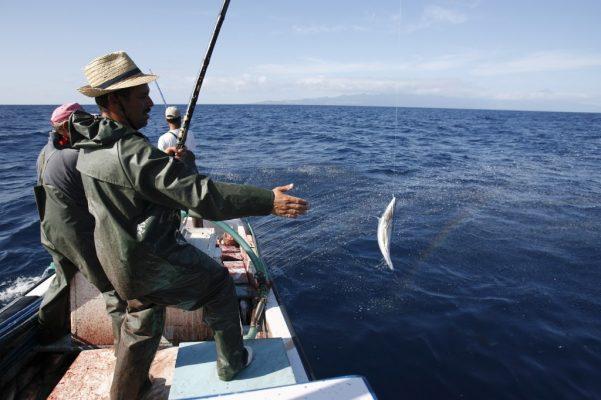 Pêche du thon à la ligne - Mestre Saul - Conserverie Santa Catarina - Açores Portugal - Nouvelle Vague l'épicerie de la pêche à Bordeaux