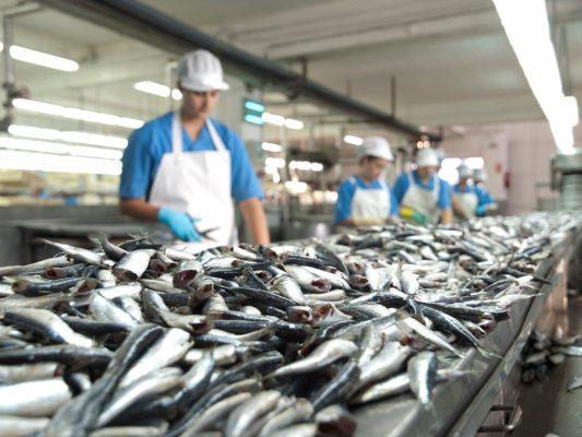 Travail des sardines - Paco Lafuente - Nouvelle Vague l'épicerie de la pêche à Bordeaux
